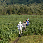 We walk for maybe 45 minutes past villages and through potato fields.